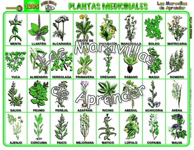 Conoce Las Distracciones Más Comunes A Las Que Te: Plantas Alimenticias Y Sus Nombres