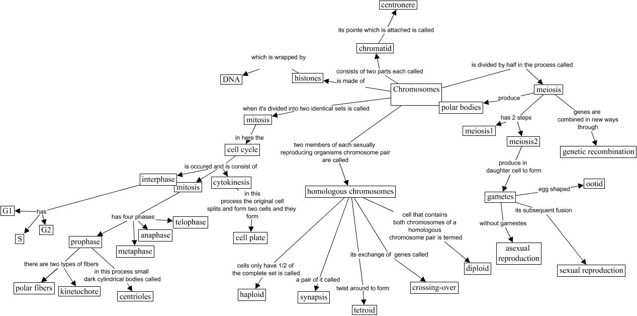 IHMC CmapTools   Concept Map :: chromosome