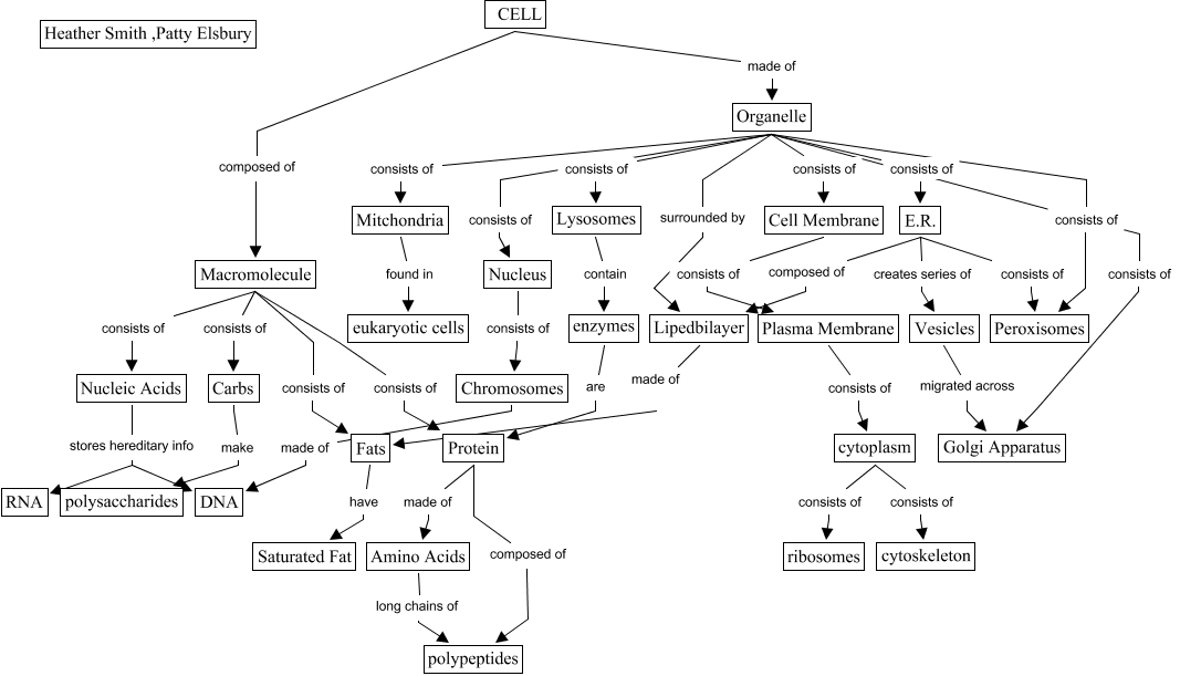 Heath And Pattis - Concept map/ cell on cell diagram, cell hierarchy, cell theory, cell potency, cell introduction, cell mapping, cell table, cell matrix, cell dichotomous key, cell membrane,