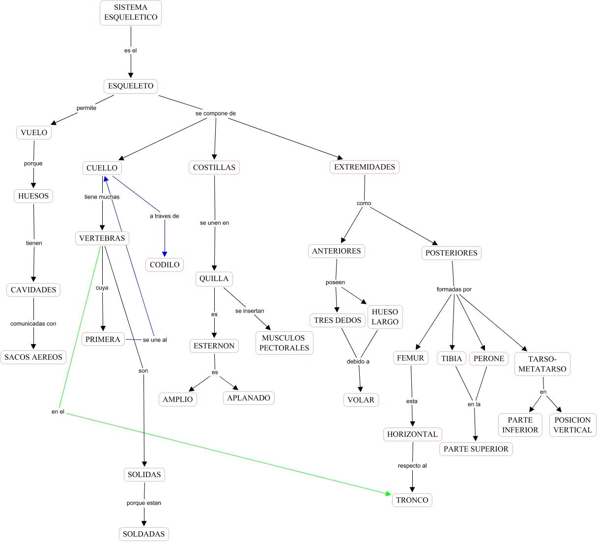 sistema esqueletico - mapa del sistema esqueletico