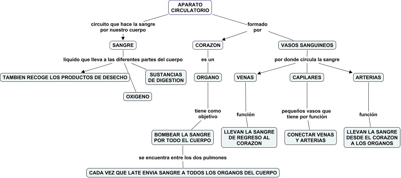 Encantador El Diagrama Del Sistema Circulatorio Ornamento - Imágenes ...