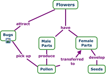 Flower Concept Map.C Map Flowers Old 3 Most Updated Cmap On Flowers