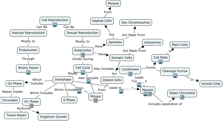 Cell Cycle Concept Map World Map 07