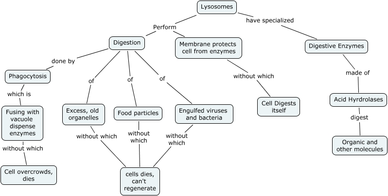 Bacterial Cell Wall Concept Map.Lysosome Blue