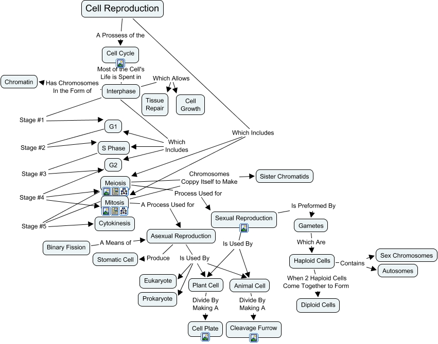 Cell Cycle Concept Map Answers