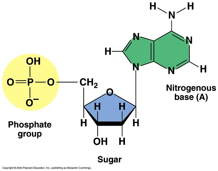 Nucleotide Diag...