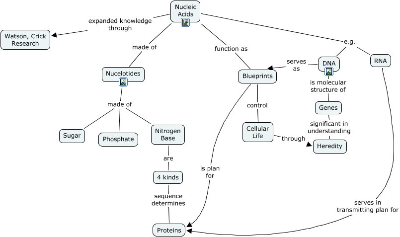 Concept Map Nucleic Acids.Nucleic Acids What Is The Structure Function Significance Of