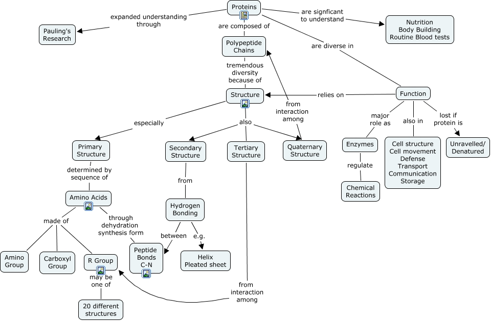 Proteins Concept Map.Proteins What Is The Structure Function And Significance Of