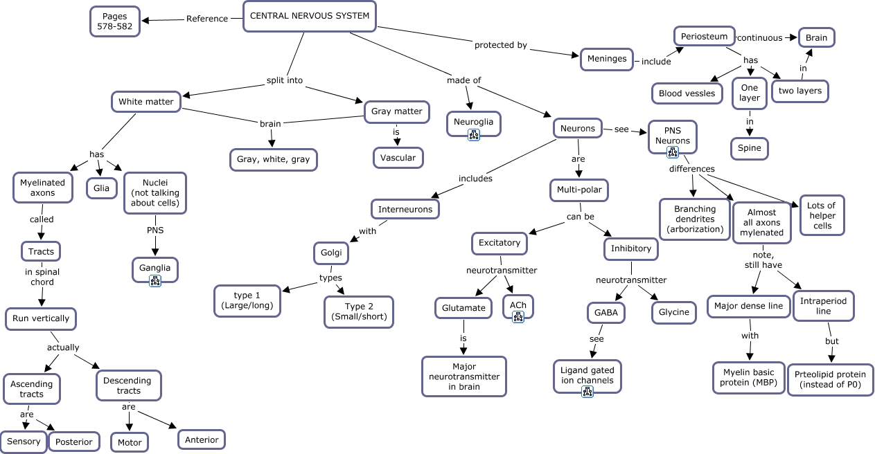 Endocrine System Concept Map Answers