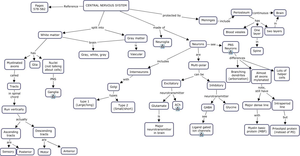 21. Central Nervous System   Overview
