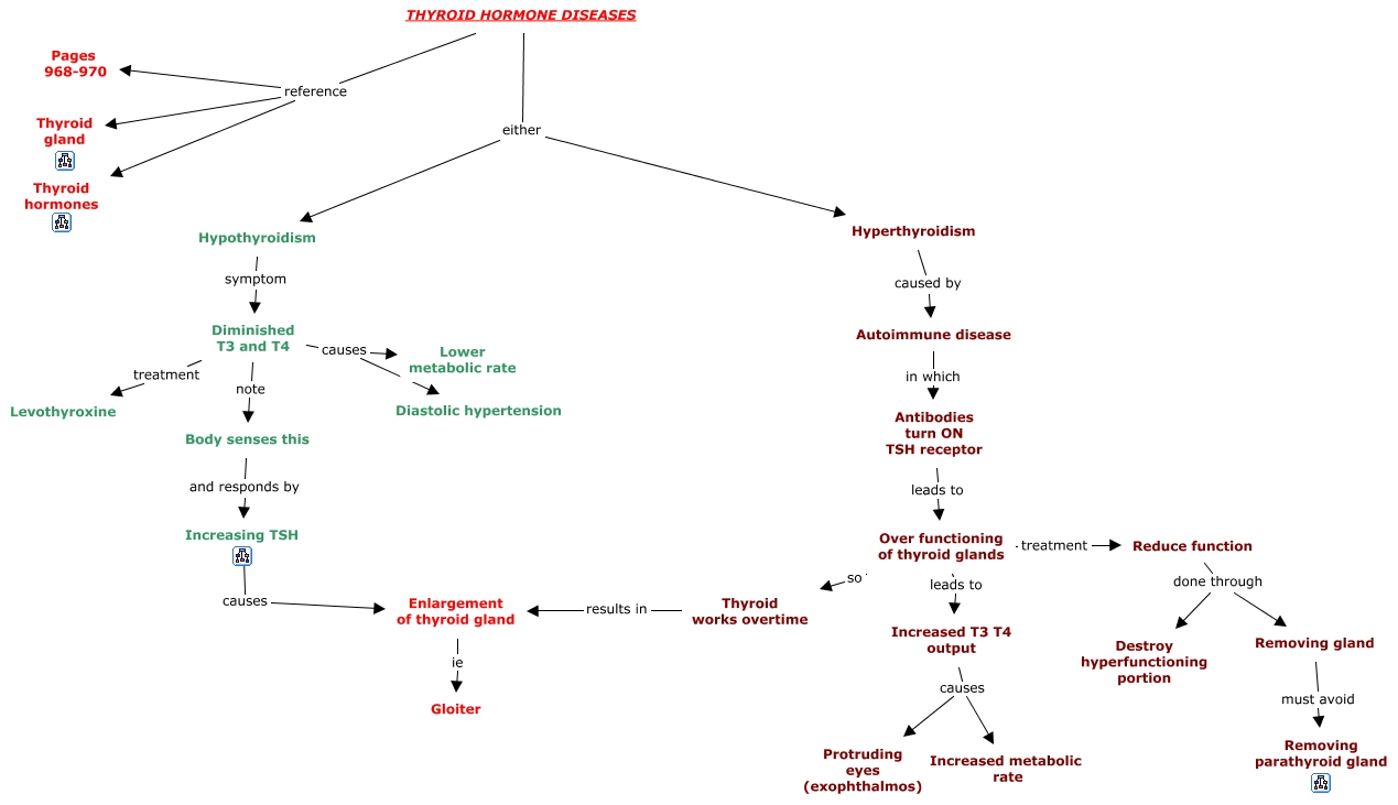 Hormone Concept Map.04b Thyroid Hormone Diseases Catos Block3