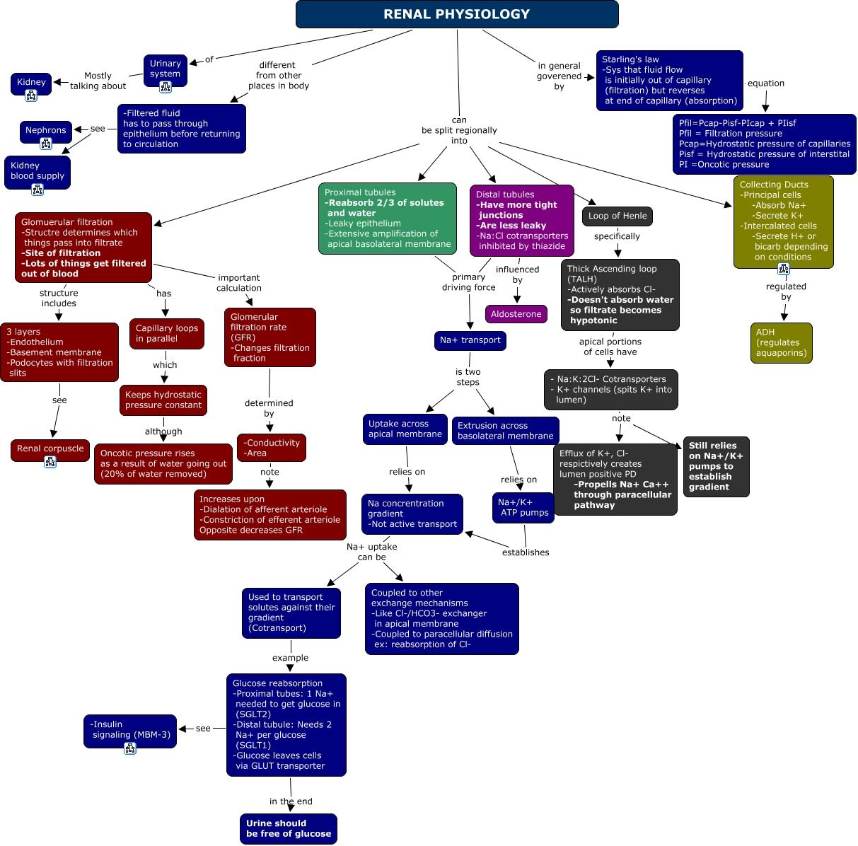 Nett Renal Anatomy And Physiology Worksheet Bilder - Menschliche ...