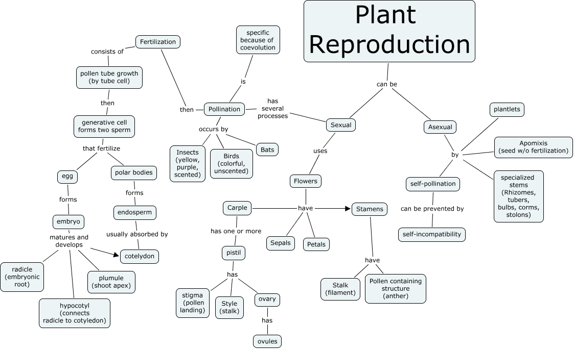 Plant%20reproduction on Life Cycle Of A Flower Worksheet
