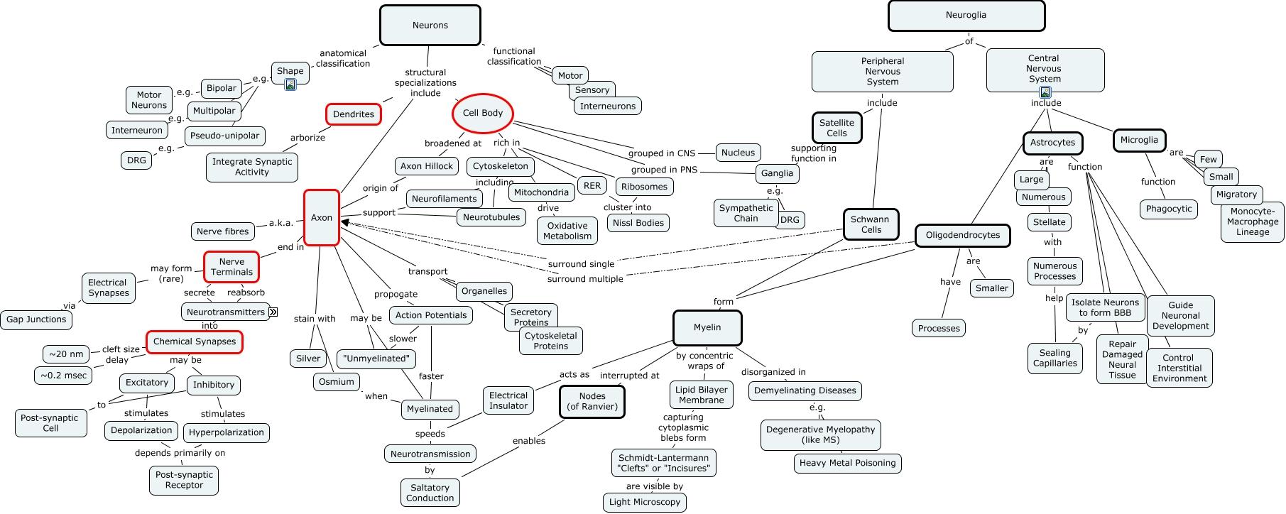 Central Nervous System Concept Map Car Interior Design