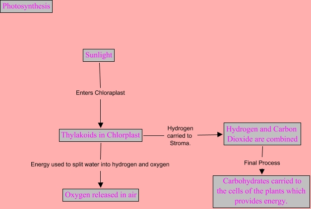 concept map for photosynthesis Unit summary how do matter and energy cycle through evidence to support explanations of the interactions of photosynthesis and cellular concept maps, or.