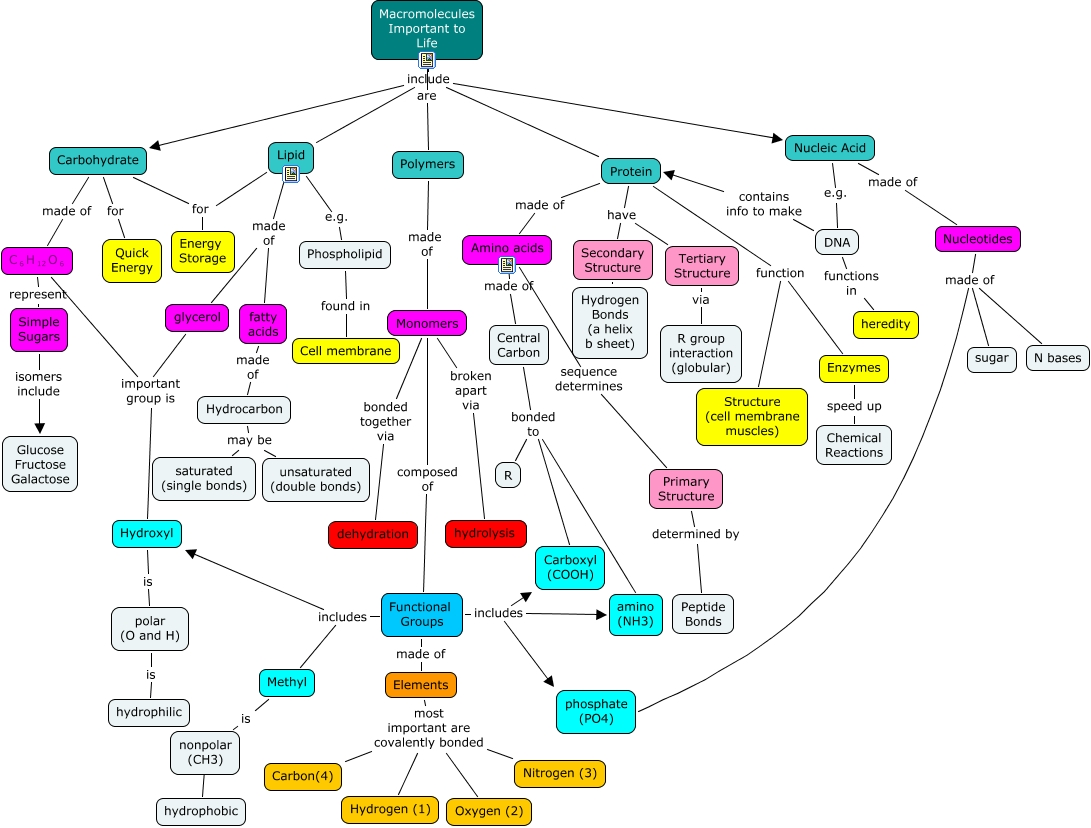 Concept Map Of Macromolecules.Macromolecule Overview Types Of Macromolecules