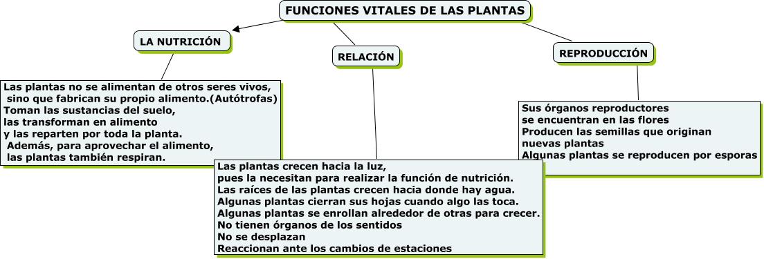 Funciones vitales en las plantas for Funcion de las plantas ornamentales