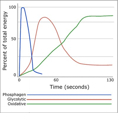 pcr resynthesis rates