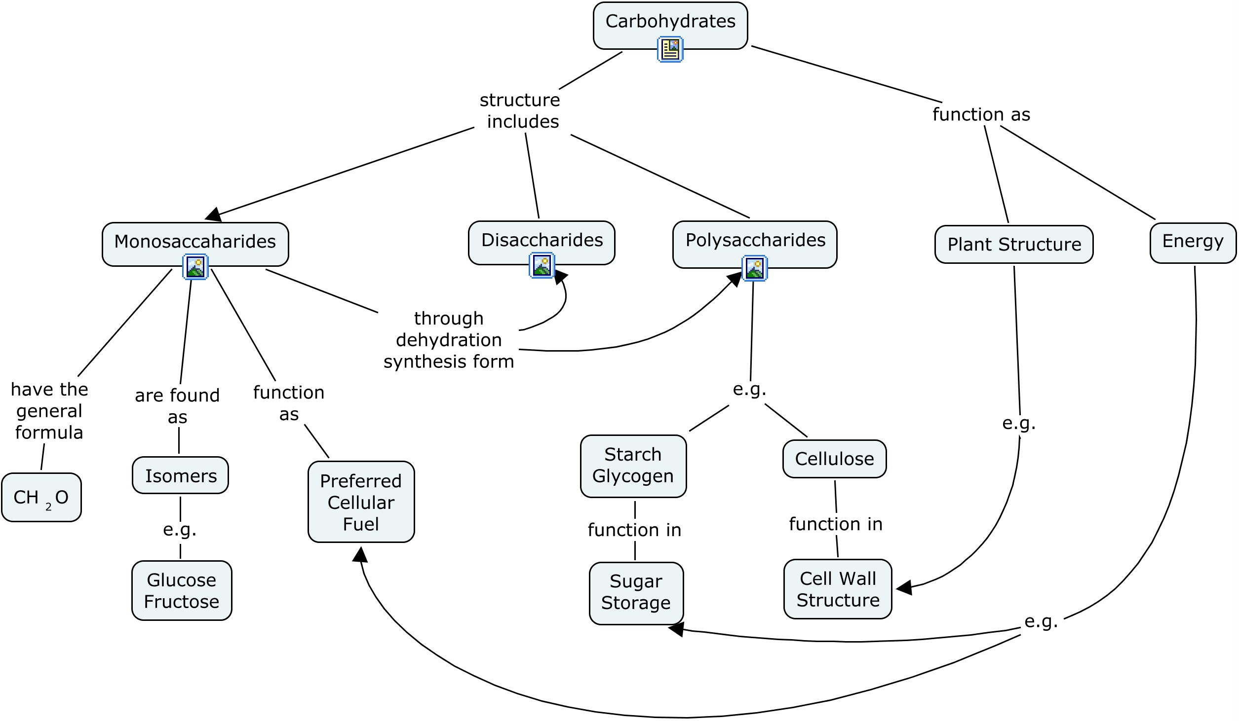 Concept Map Of Macromolecules.Macromolecules Concept Map Thinking Maps