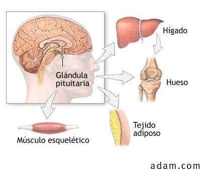 esteroides para dolores musculares