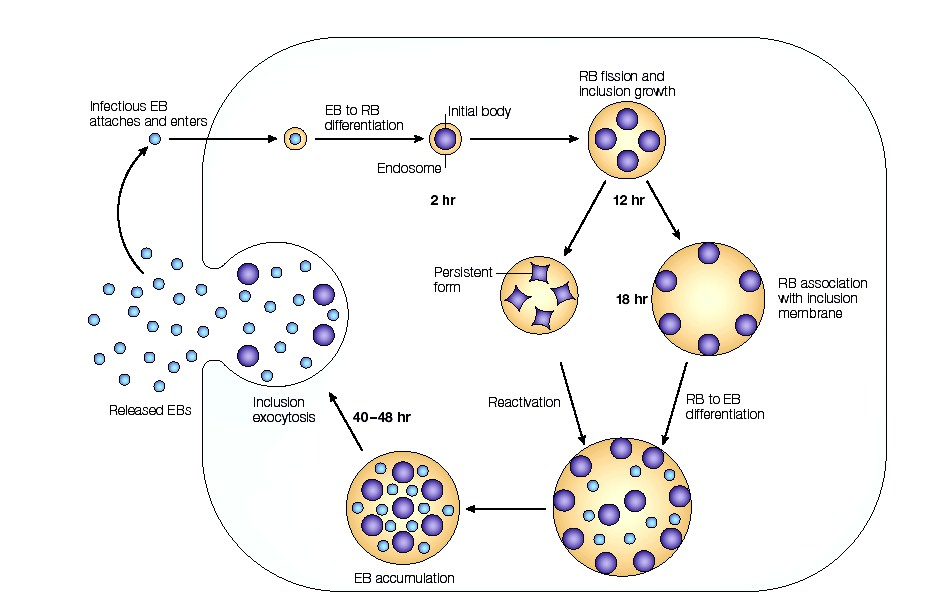 an experiment on the rate of reproduction of bacterias Sexual reproduction happens when specialized cells,  rate this post (9 votes,  difference between fungi and bacteria.