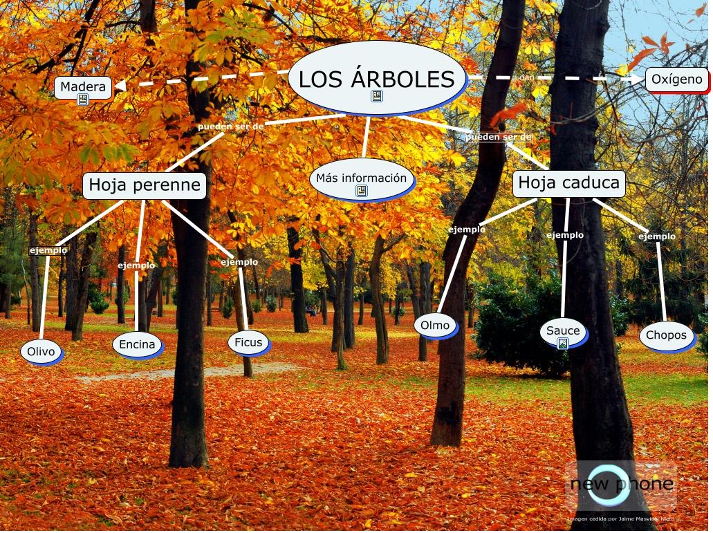 Arboles for Arboles de hoja perenne de jardin