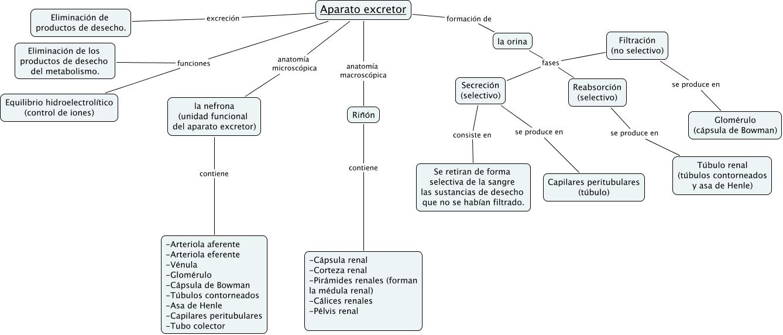 Cmap excretor Nuria Matey