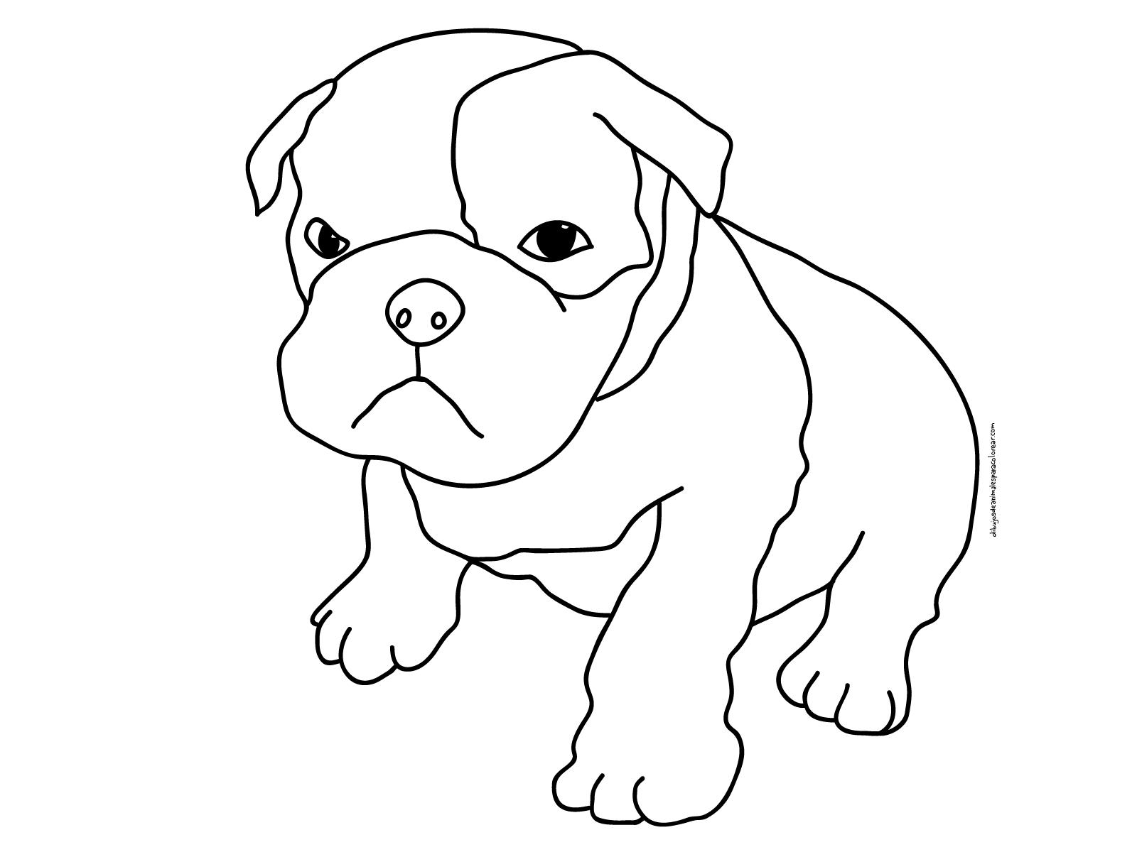 Dibujos De Perros Pitbull