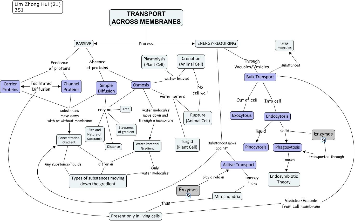 Biology Transport Of Substances