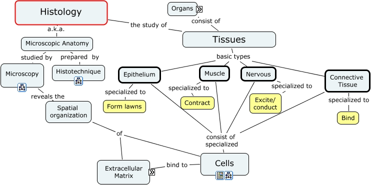 Microbiology Concept Map.Histology What Is Histology