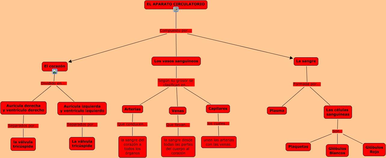 Hermosa Diagrama De Vaso Sanguíneo Imágenes - Anatomía de Las ...