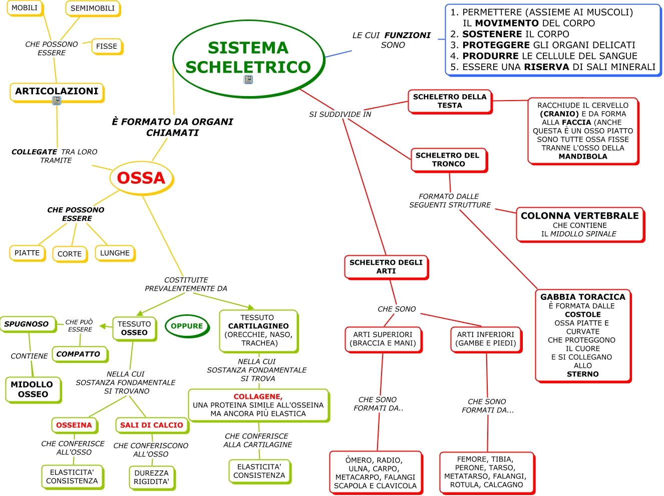 Scienze sistema scheletrico totale mappa concettuale for Scienze della comunicazione esami da sostenere