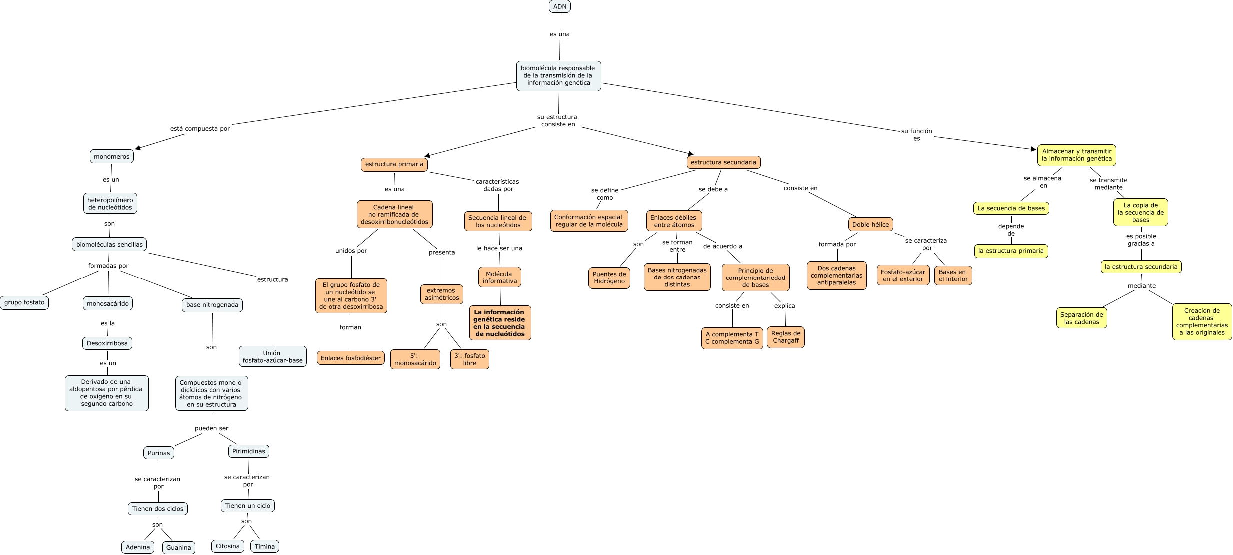 Adn El Dna Adn Composición Química Y Estructura