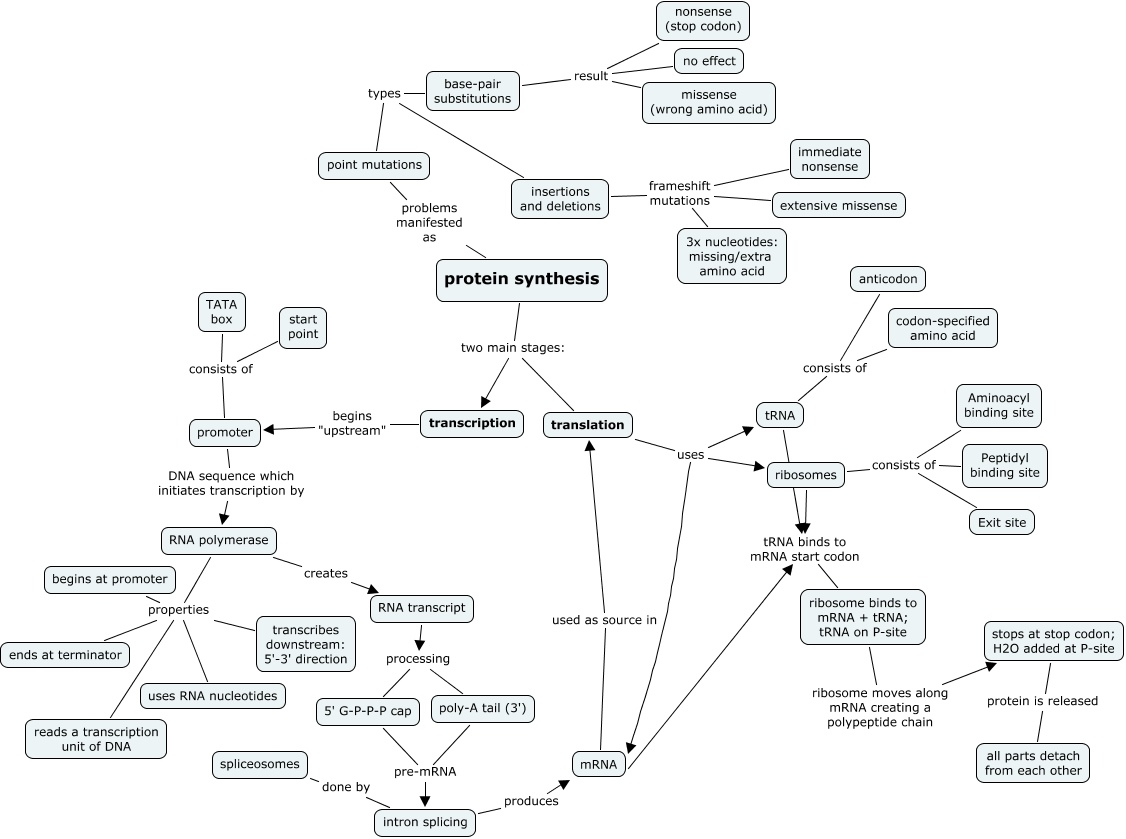 PROTEIN SYNTHESIS CONCEPT MAP   protein synthesis