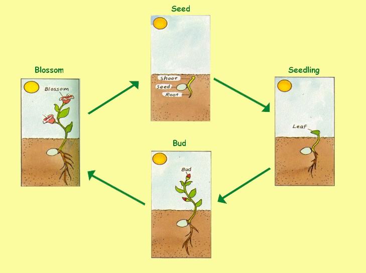 Pin Apple Tree Worksheet Pdf on Pinterest