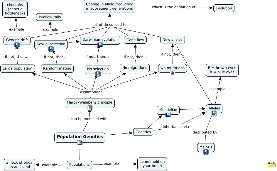 How Does Mendelian Genetics Relate To Natural Selection