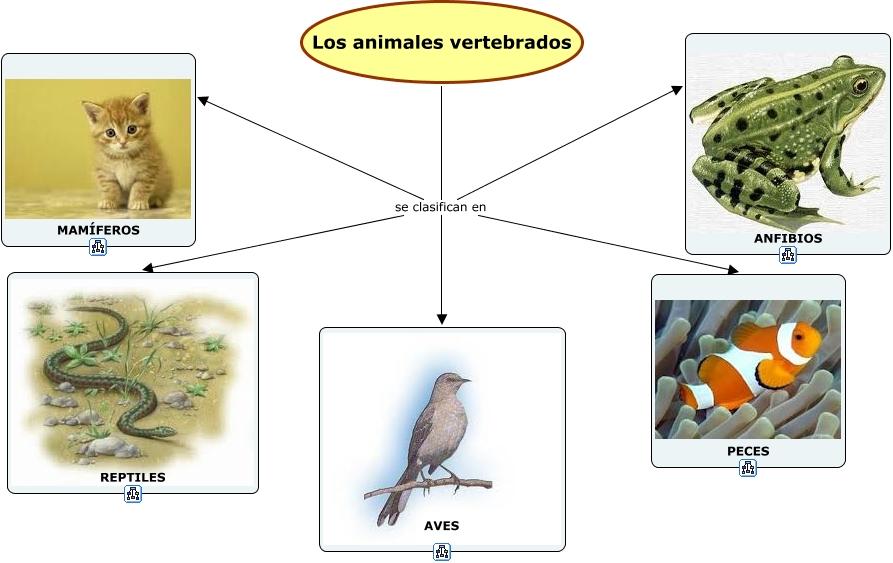 Los animales vertebrados for Como se cultivan los peces