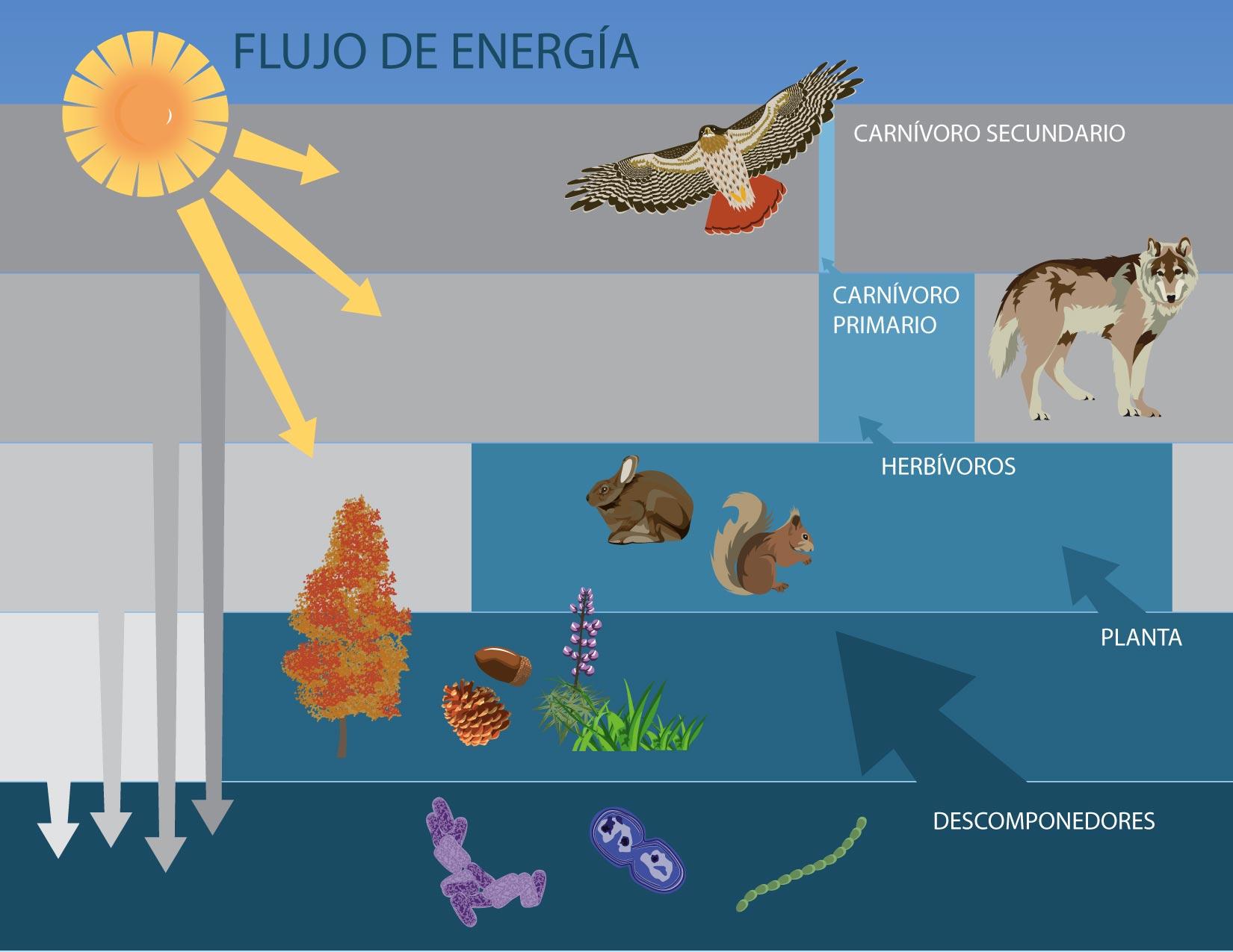 C mo funciona un ecosistema for Como se llama el hotel que esta debajo del mar