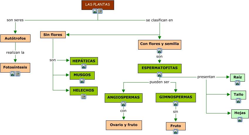 las plantas On como se clasifican las plantas ornamentales