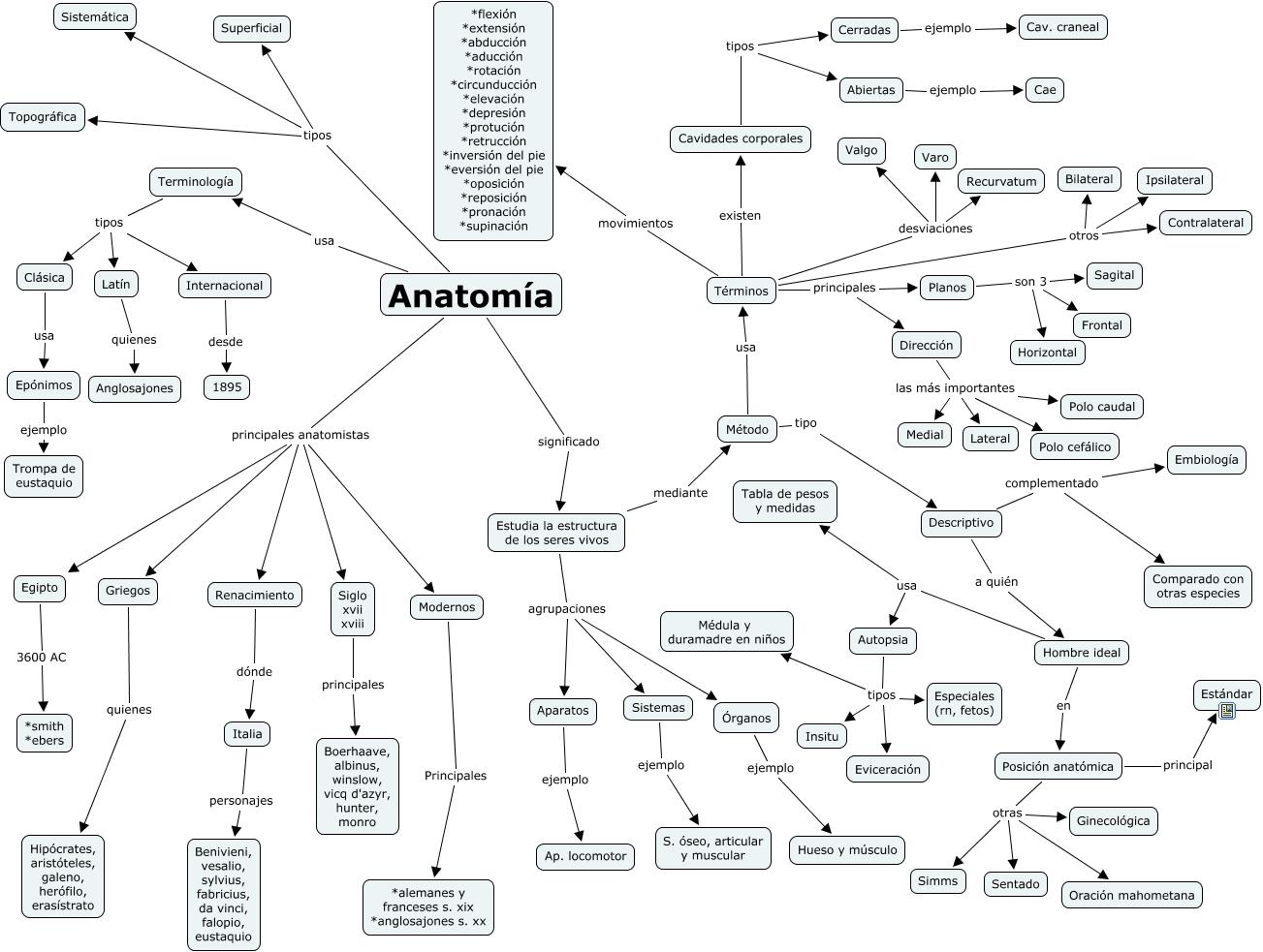 1. Anatomía