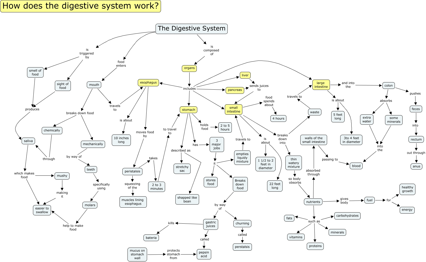 The Digestive System How Does The Digestive System Work