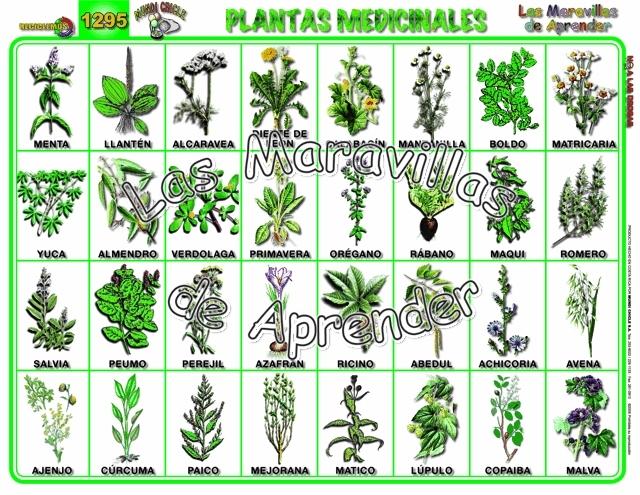 Partes de la planta grado primero for 20 plantas ornamentales