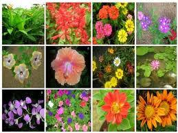 Ihmc public cmaps 3 for 20 plantas ornamentales