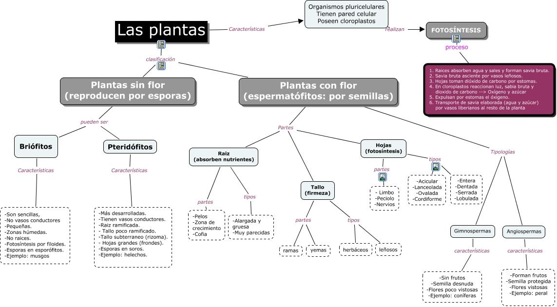 Las plantas con enlaces for Clasificacion de las plantas ornamentales