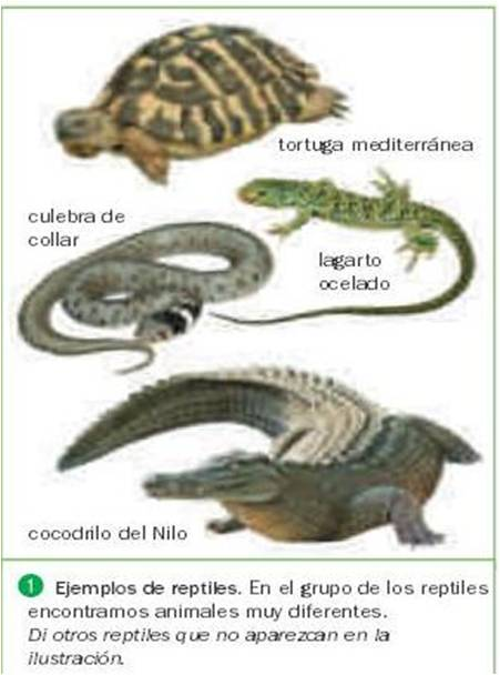 Q Son Los Reptiles IHMC Public Cmaps (3)