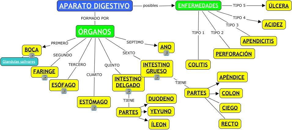 Partes del aparato digestivo - ¿Qué partes componen el aparato ...
