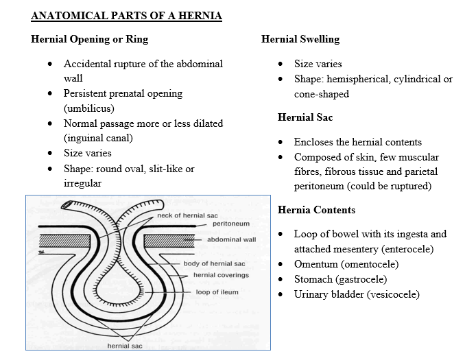 Hernias And Umbilical Masses